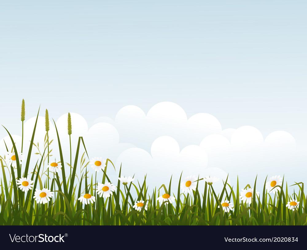 Wild flower meadow vector | Price: 1 Credit (USD $1)