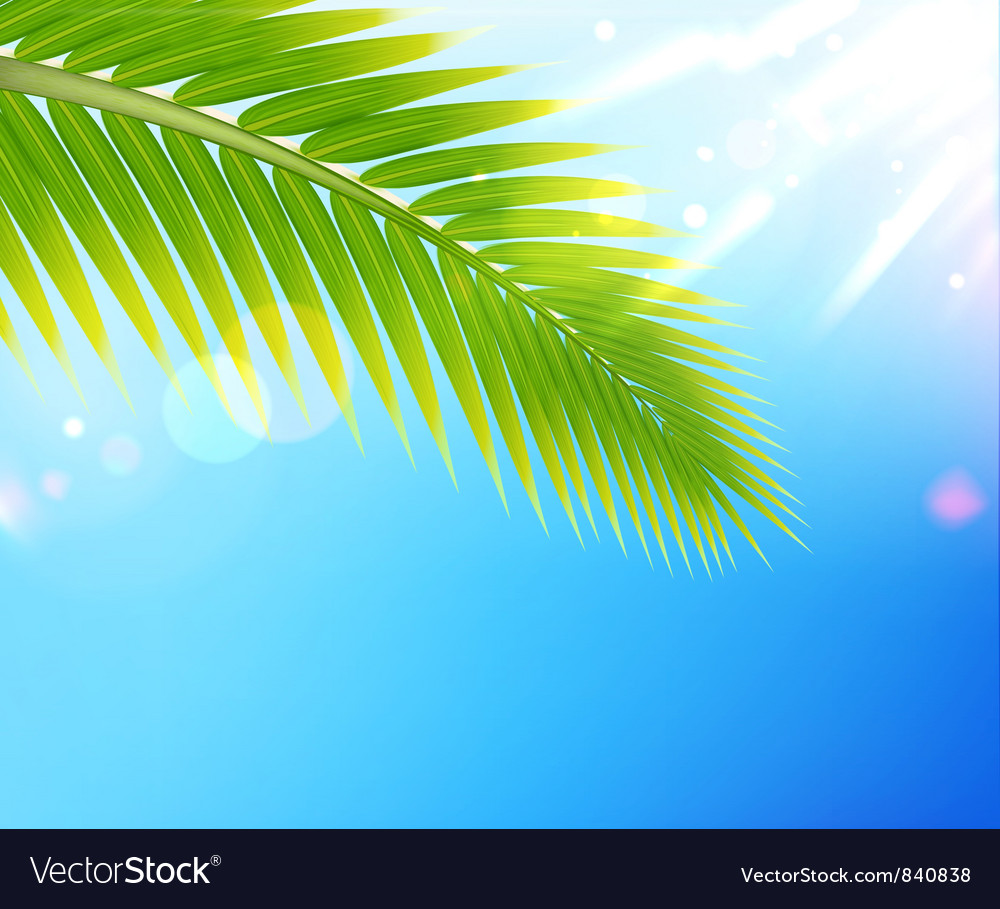 Tropical summer background vector | Price: 1 Credit (USD $1)