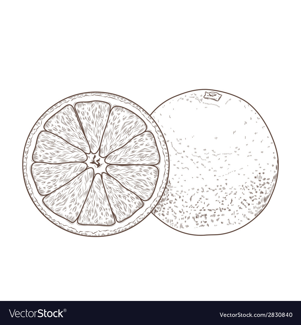 Sliced orange fruits vector | Price: 1 Credit (USD $1)