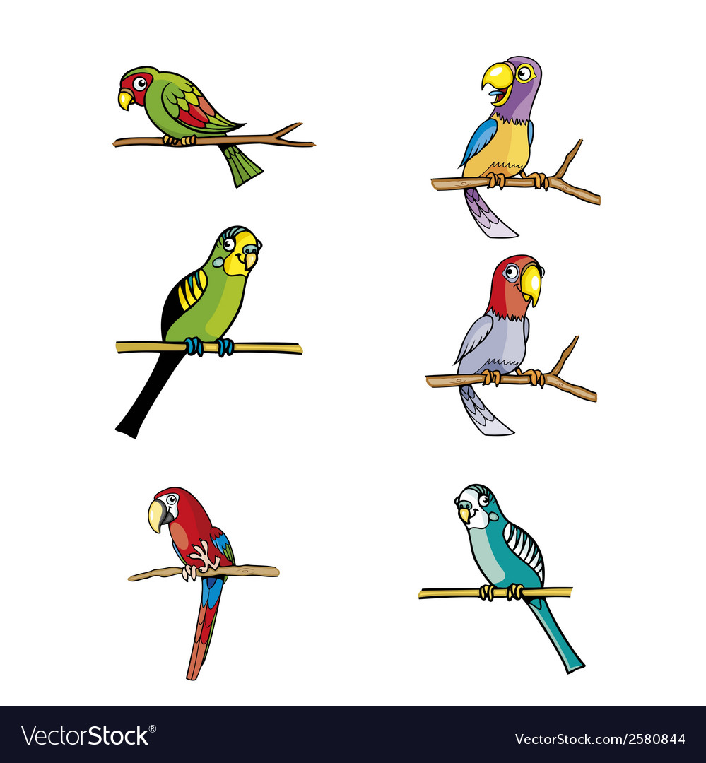 Set of parrots isolated on white vector | Price: 1 Credit (USD $1)