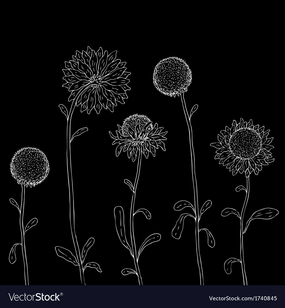 Yellow sunflower on a white background vector | Price: 1 Credit (USD $1)