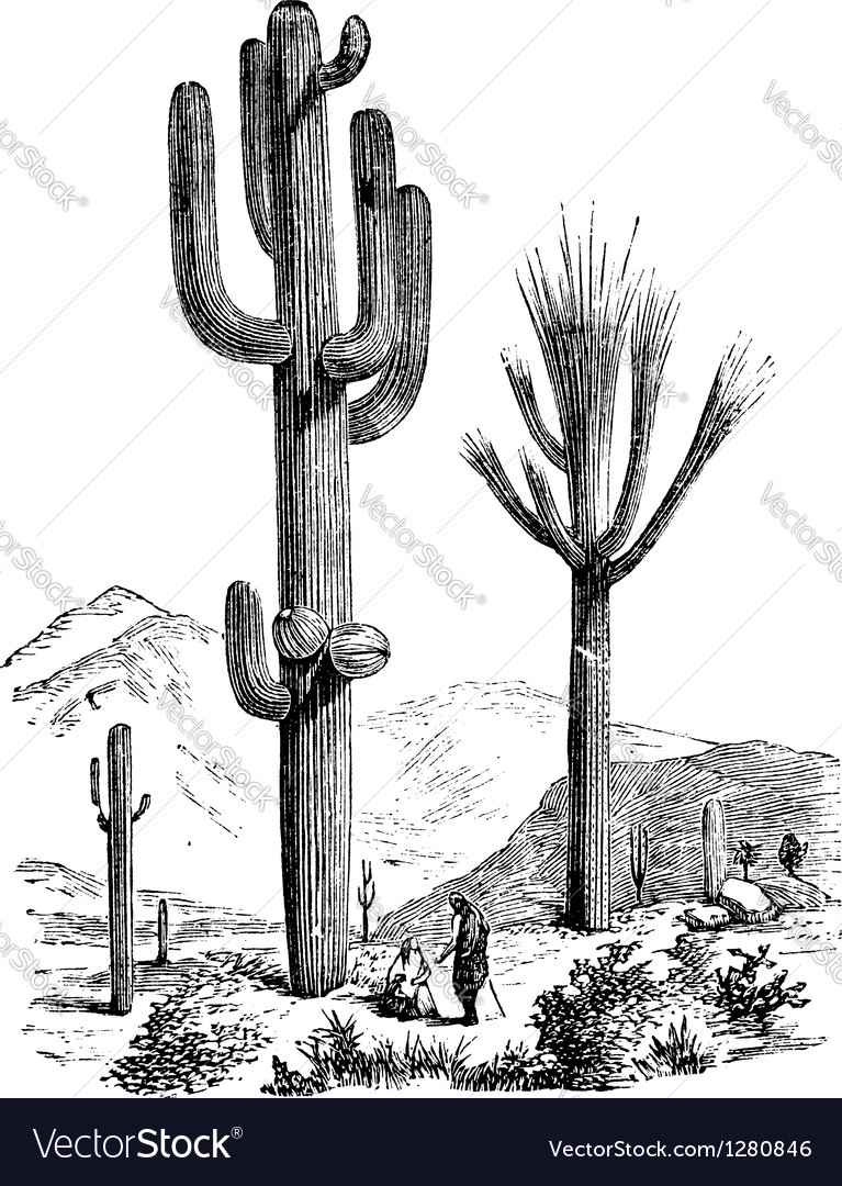 Saguaro vintage engraving vector | Price: 1 Credit (USD $1)