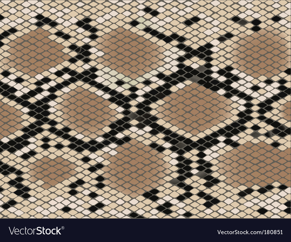 Snake skin pattern vector | Price: 1 Credit (USD $1)