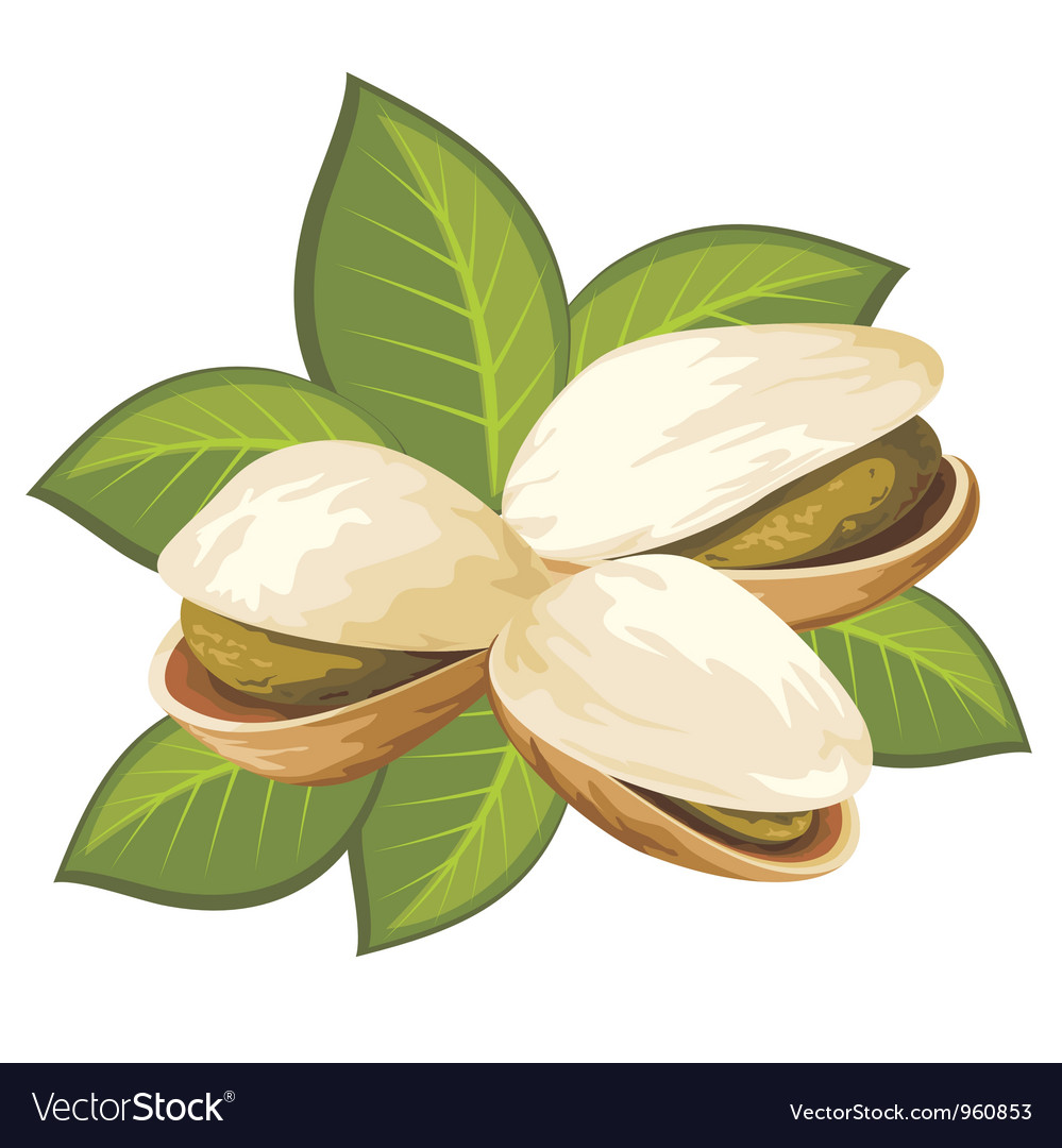 Pistachio vector | Price: 1 Credit (USD $1)