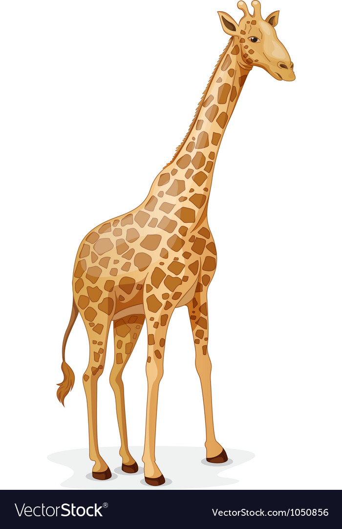 Giraffe vector | Price: 1 Credit (USD $1)