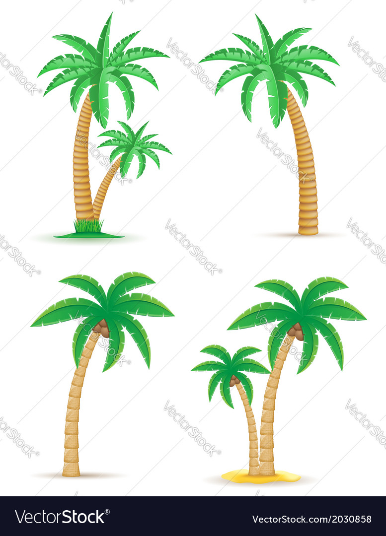 Palm 05 vector | Price: 1 Credit (USD $1)