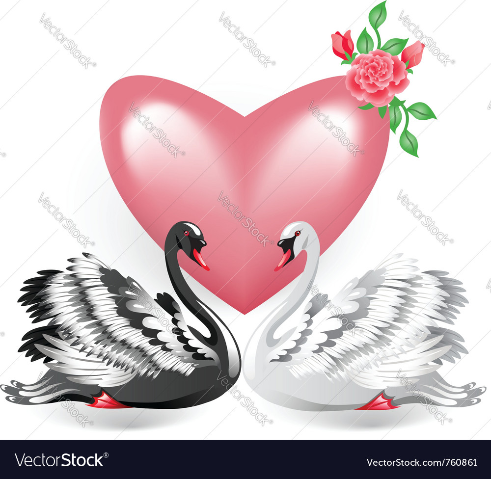 Elegant swan vector | Price: 1 Credit (USD $1)