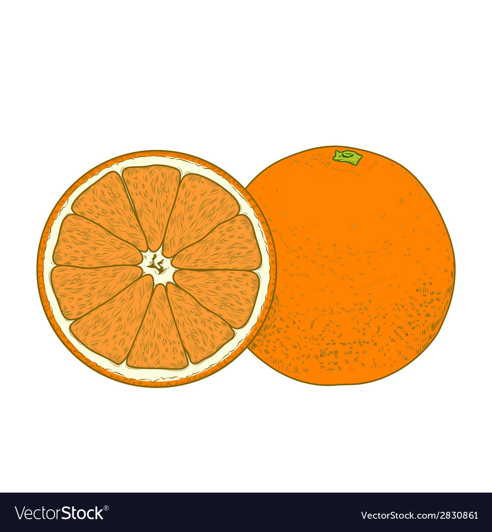 Sliced orange fruits vector | Price: 1 Credit (USD $1)