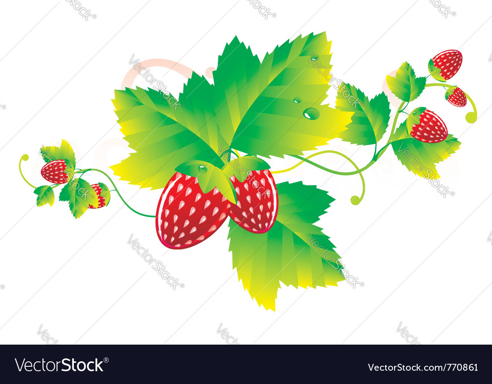 Strawberry leaves vector | Price: 1 Credit (USD $1)