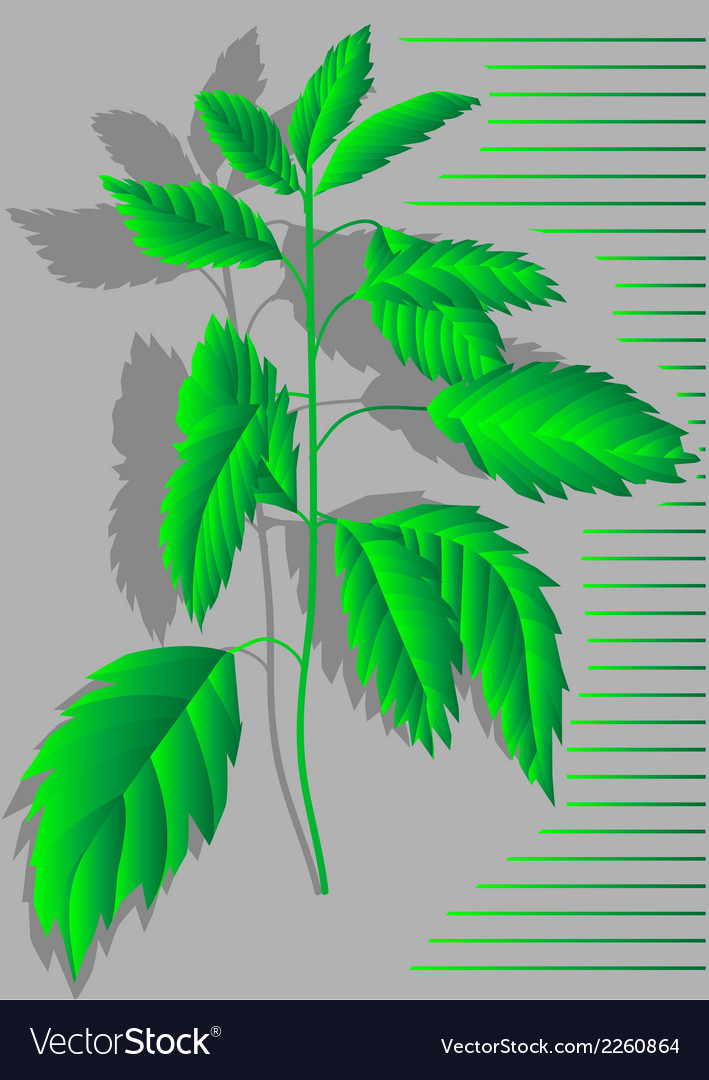 Nettles vector | Price: 1 Credit (USD $1)