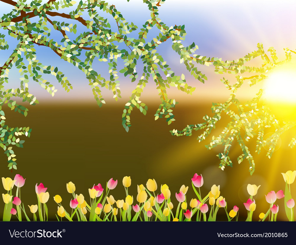 Tulip field with tulips eps 10 vector | Price: 1 Credit (USD $1)
