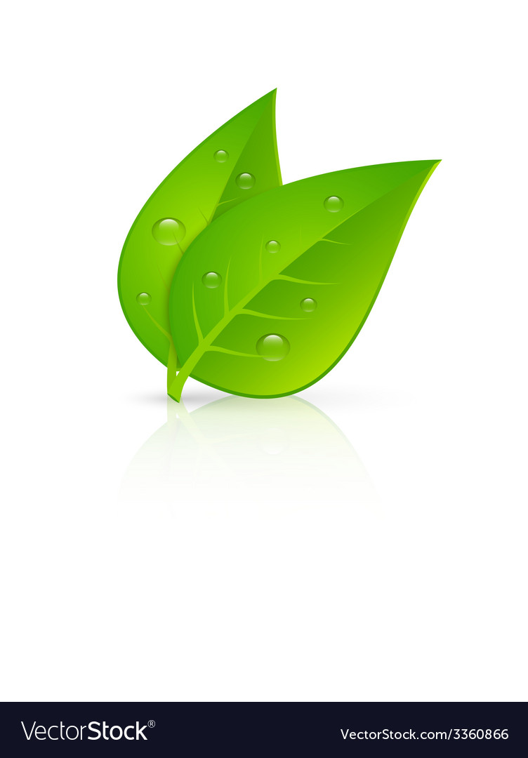 Green leaves realistic image print vector | Price: 1 Credit (USD $1)