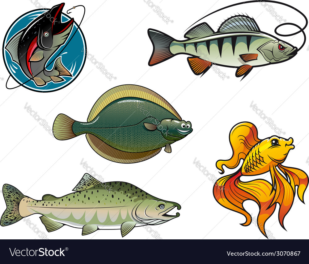 Salmon flounder perch and goldfish vector | Price: 1 Credit (USD $1)