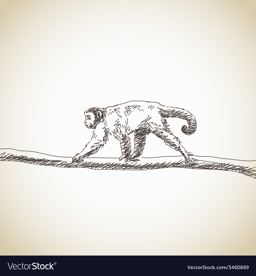Brown capuchin vector   Price: 1 Credit (USD $1)