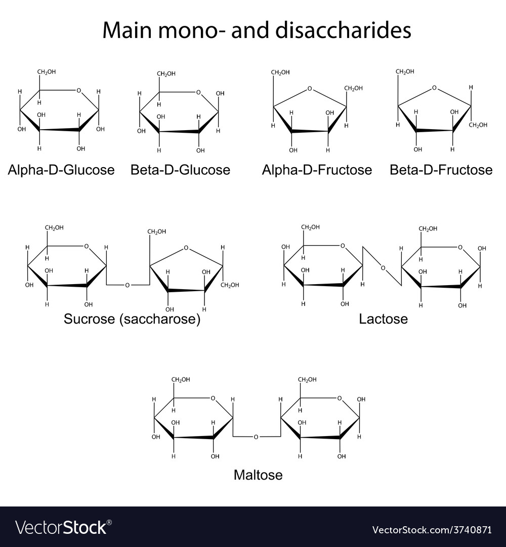 Main cyclic monosaccharides and disaccharides vector