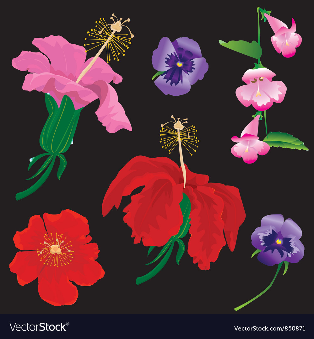 Set of flowers bloom - hibiscus violet vector | Price: 1 Credit (USD $1)