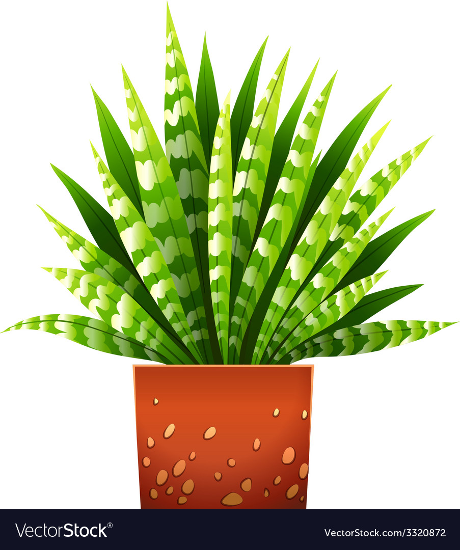 A houseplant with a pot vector | Price: 1 Credit (USD $1)