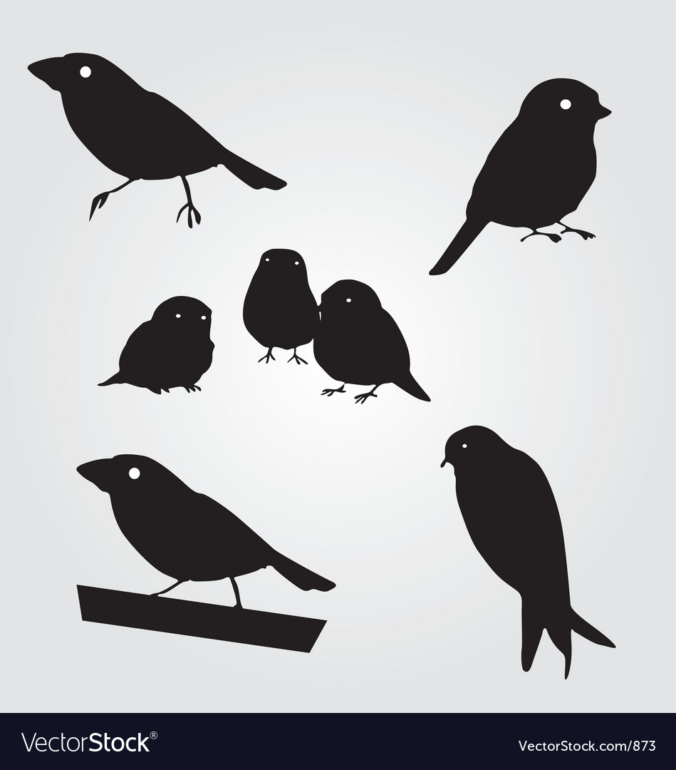 Budgies vector | Price: 1 Credit (USD $1)