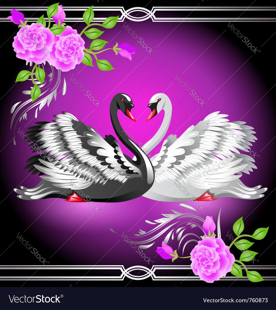 Elegant swans vector | Price: 1 Credit (USD $1)