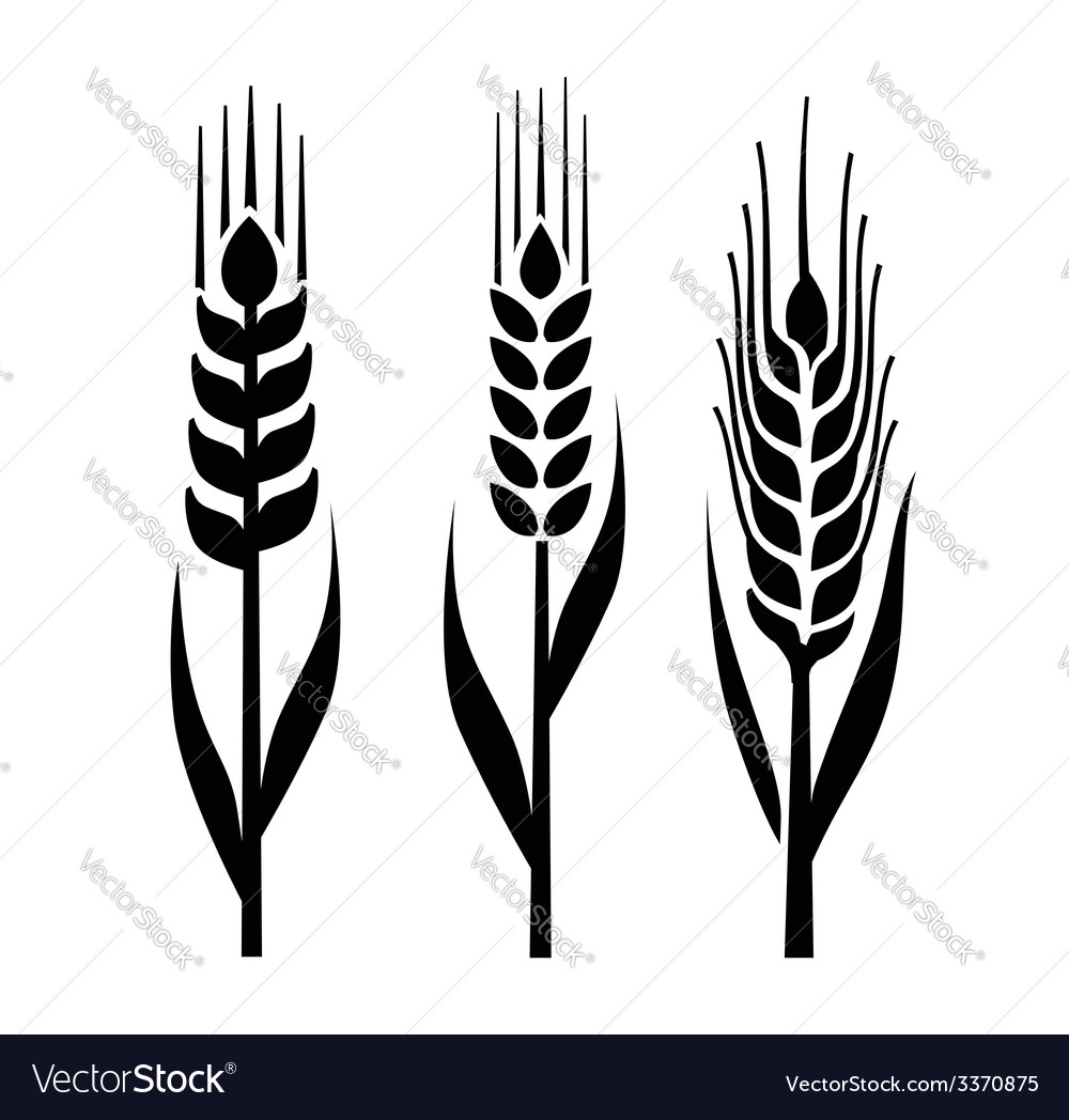 Wheat icon vector | Price: 1 Credit (USD $1)