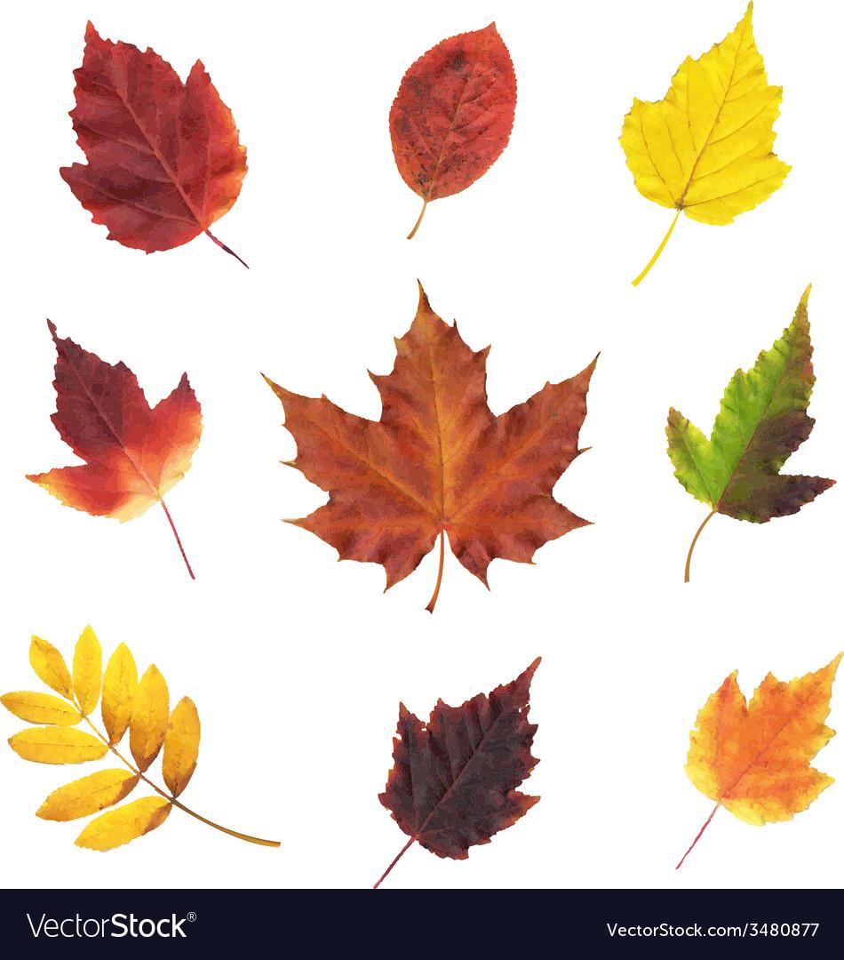 Big set leaves vector | Price: 1 Credit (USD $1)