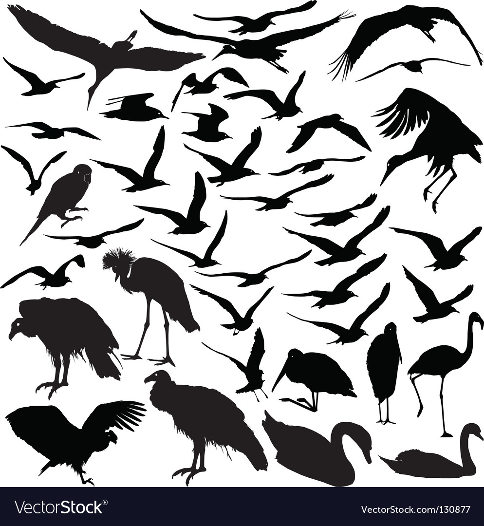 Set of birds vector | Price: 1 Credit (USD $1)