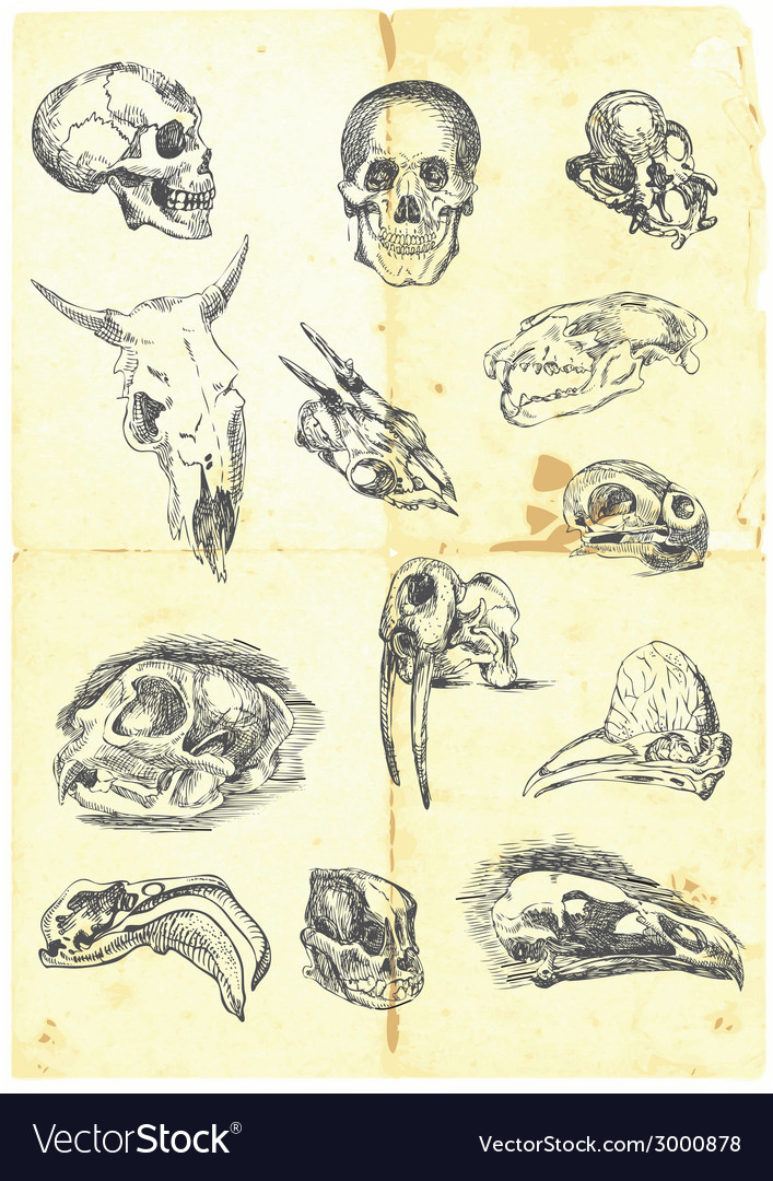 Various skulls vector | Price: 1 Credit (USD $1)
