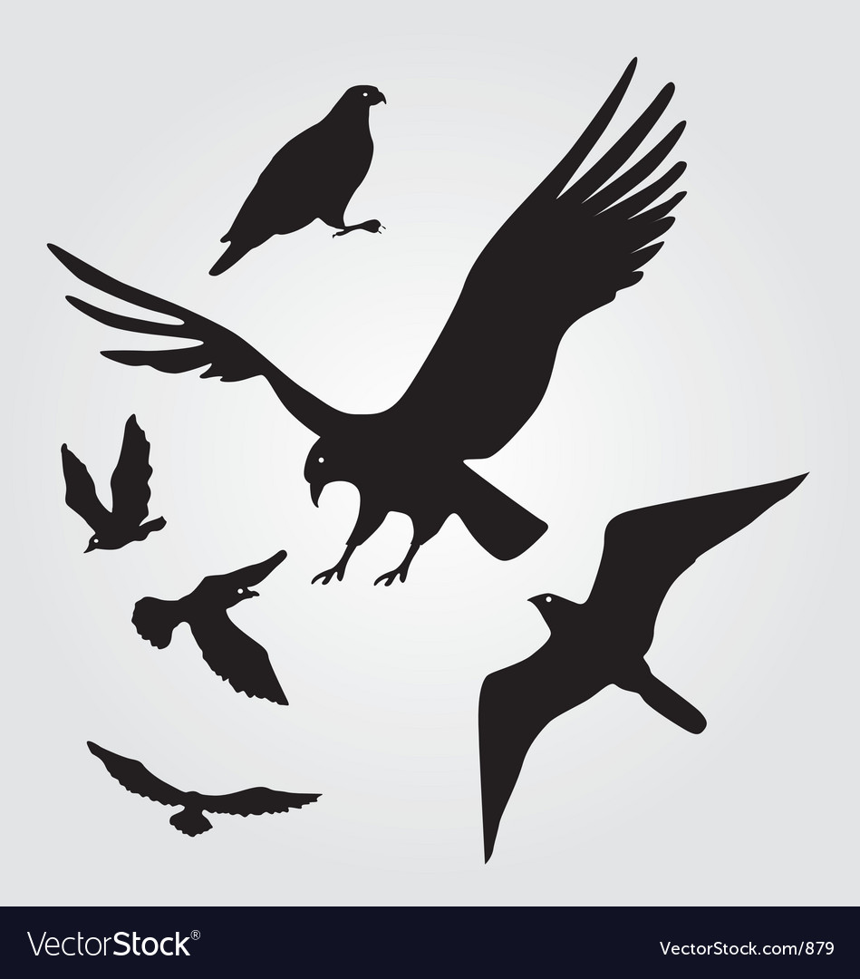 Flying hawks and seagulls vector | Price: 1 Credit (USD $1)