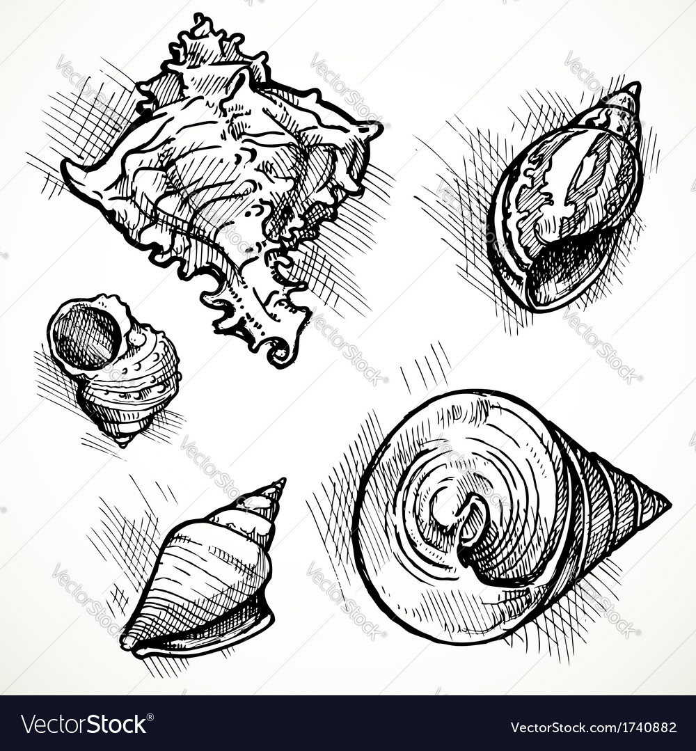 Set of sketches different shapes shell 1 vector | Price: 1 Credit (USD $1)