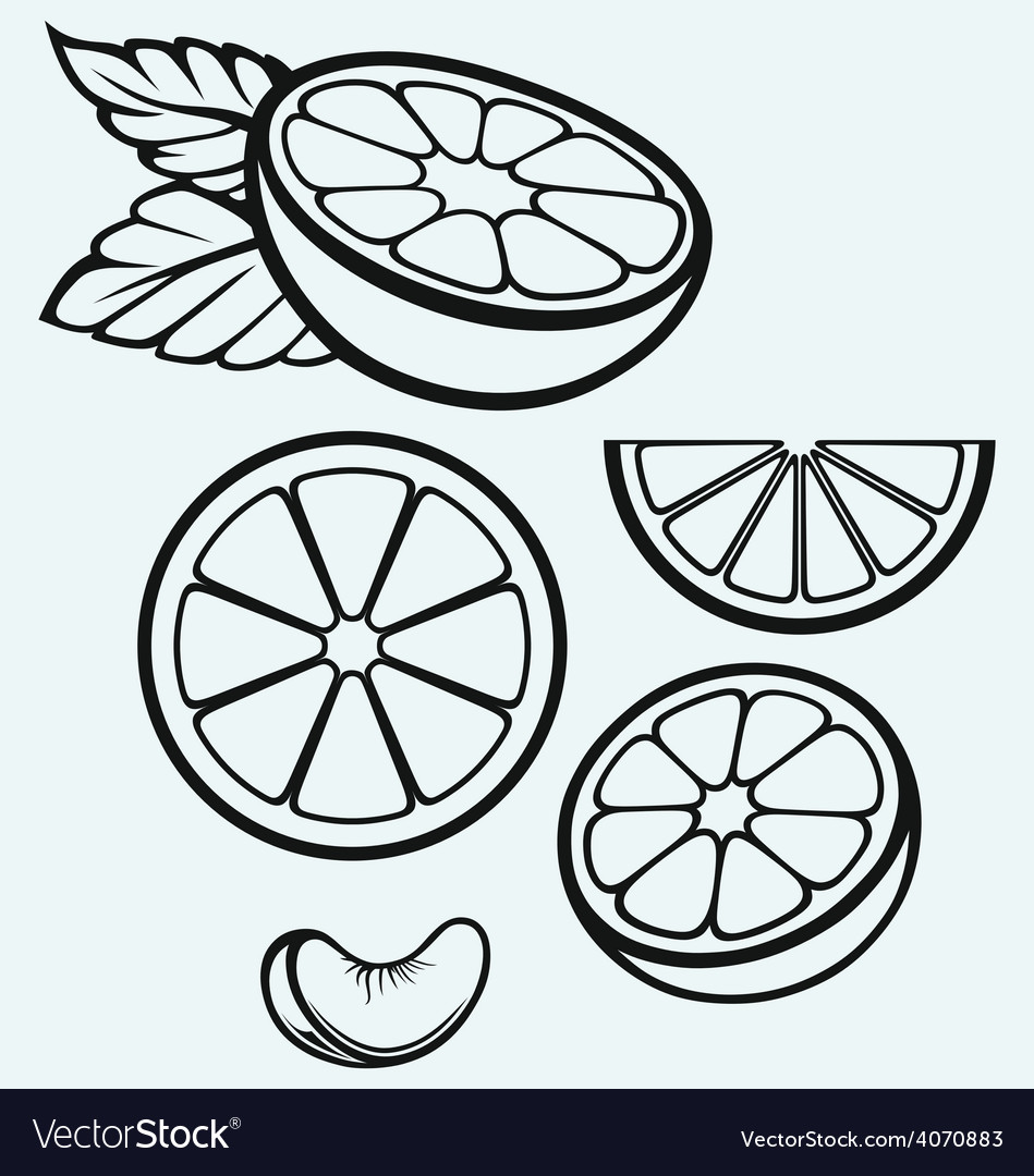 Oranges fruits and slices vector | Price: 1 Credit (USD $1)