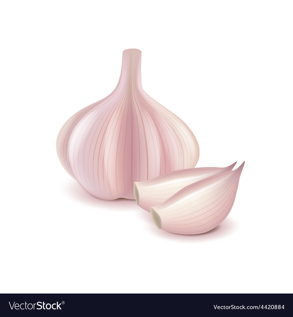 Garlic and slice isolated on white vector | Price: 3 Credit (USD $3)