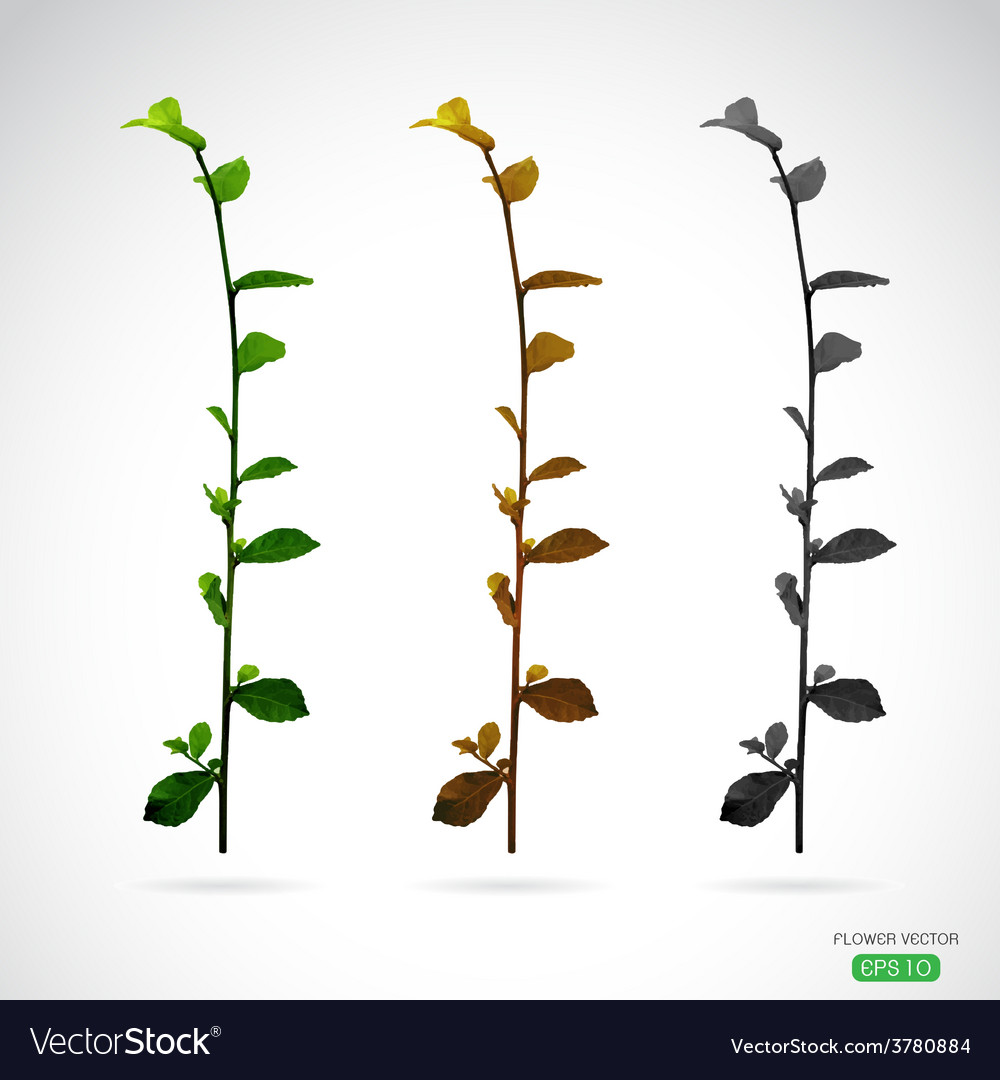 Image of leaves vector | Price: 1 Credit (USD $1)