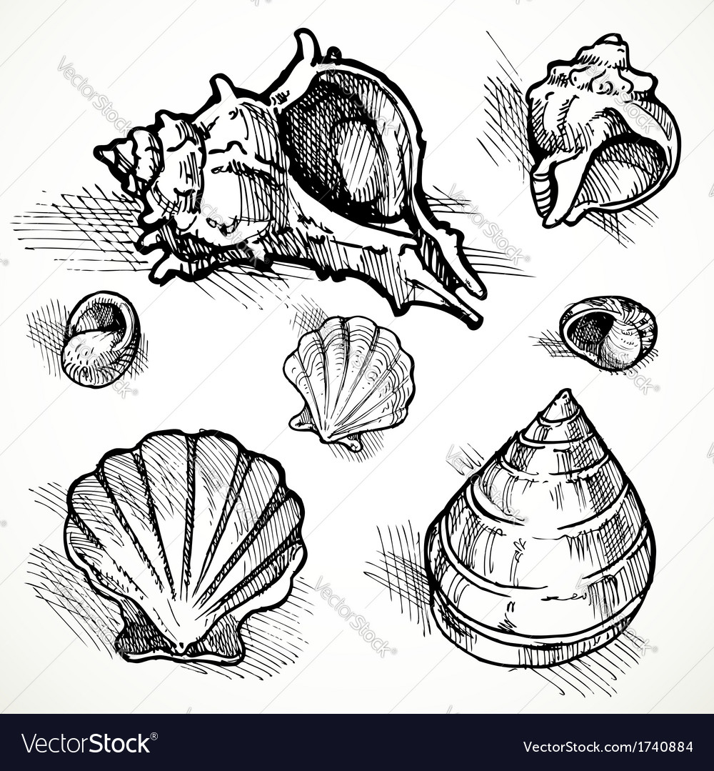 Set of sketches different shapes shell 2 vector | Price: 1 Credit (USD $1)