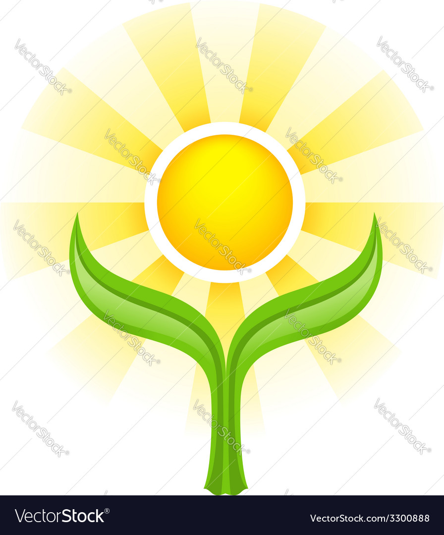 Sun above two green leaves vector | Price: 1 Credit (USD $1)