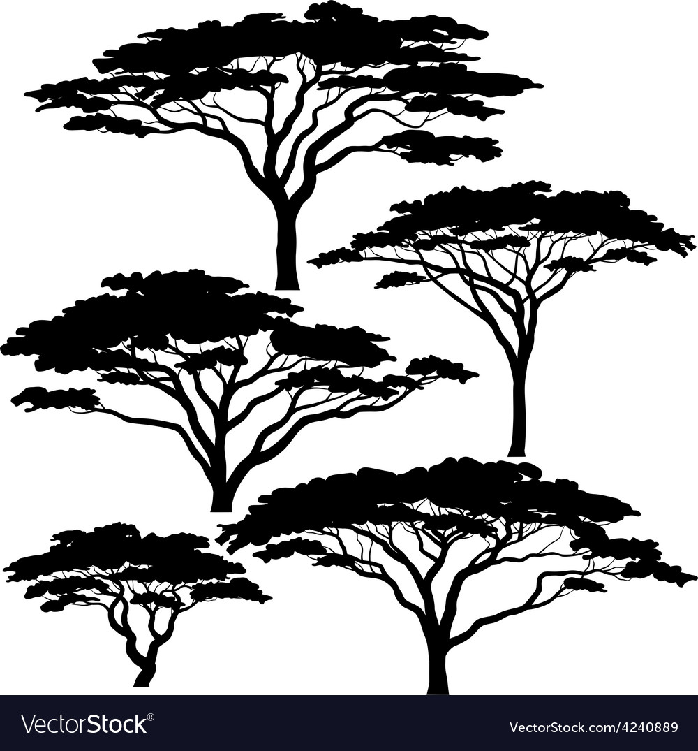 Acacia tree silhouettes vector | Price: 1 Credit (USD $1)