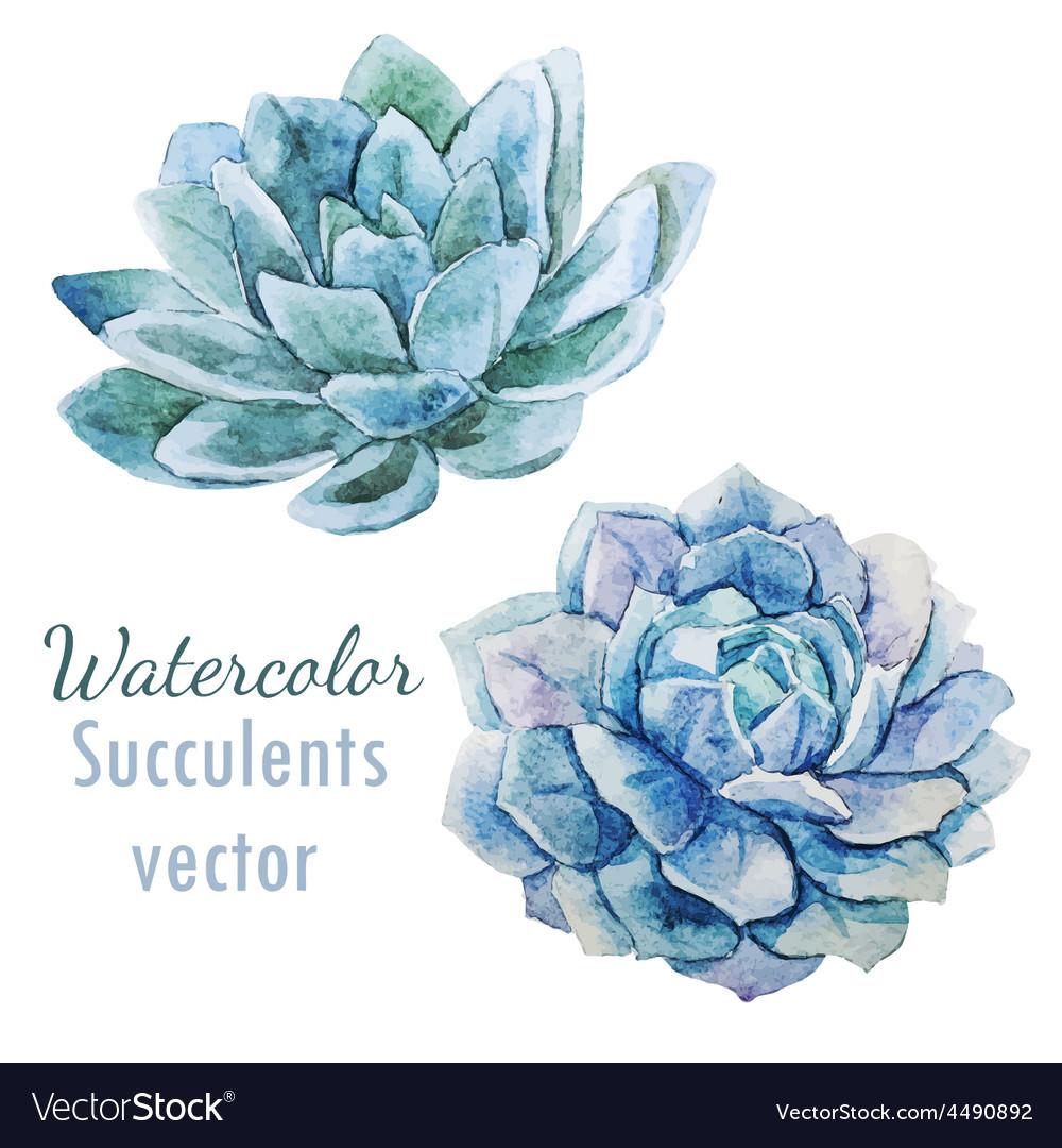 Succulent flowers vector   Price: 1 Credit (USD $1)