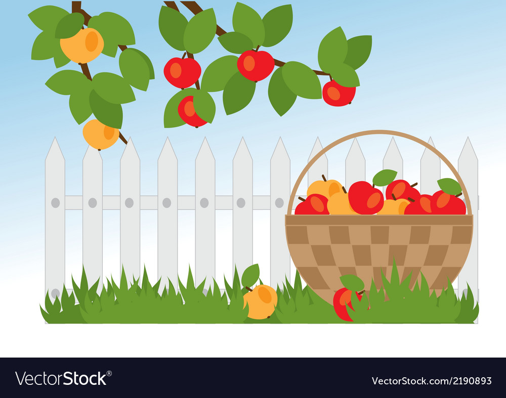 Basket with apples vector | Price: 1 Credit (USD $1)