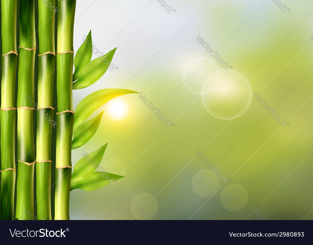 Spa background with bamboo vector | Price: 1 Credit (USD $1)