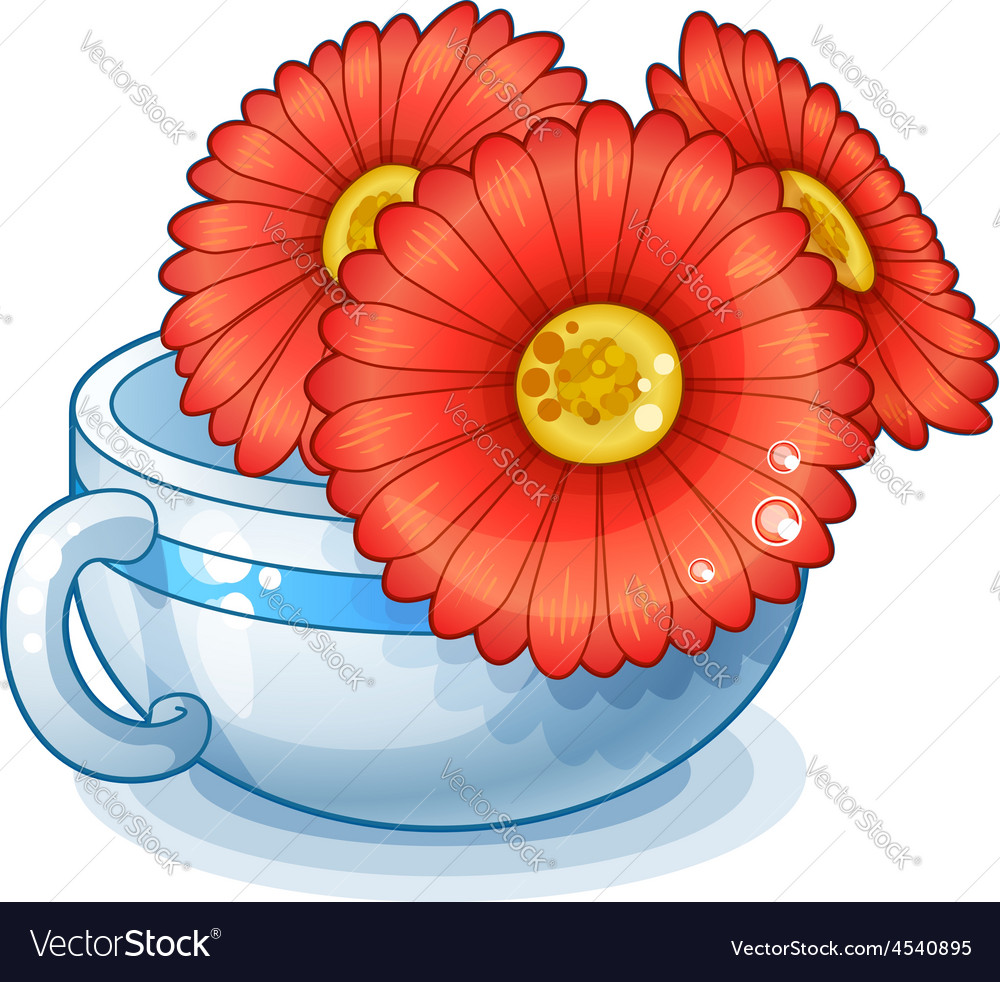 Red flowers in cup isolated on white background vector | Price: 1 Credit (USD $1)