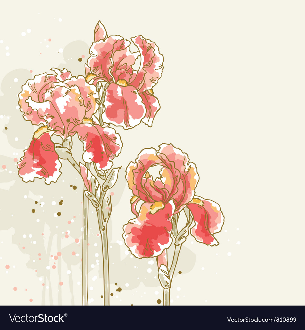 Background with three red iris flowers vector | Price: 1 Credit (USD $1)