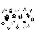 Animal footprints and tracks vector