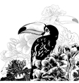 Tropical background with exotic flowers toucan vector
