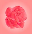 Flower pink rose symbol of love vector
