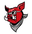 Hog head wear a scarf vector