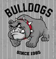Vintage bulldog mascot vector