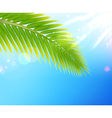 Tropical summer background vector