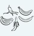 Bunch of bananas vector