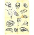 Various skulls vector