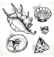 Set of sketches different shapes shell vector