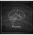 Vintage of human brain on blackboard background vector